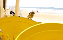 Beach chairs get a visitor, in Fortaleza, Brazil.