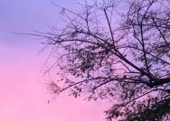 Pink sky in Los Angeles.