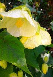 Taken in my garden.