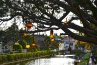 Beautiful lamps ornate a large tree in Venice, California.