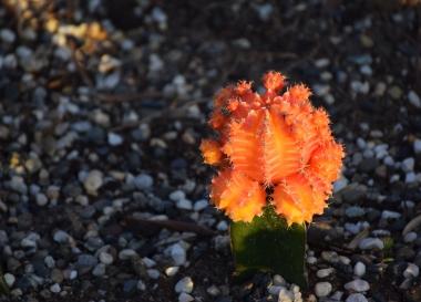 Cutest cactus ever.
