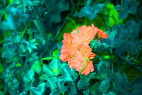 DSC_0608_edited-1