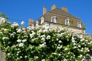 Wall of roses with the château in the background.
