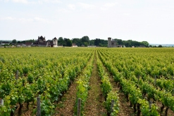 The vineyard.