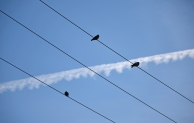 Three birds, three wires.