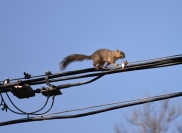 Squirrel-DSC_6309