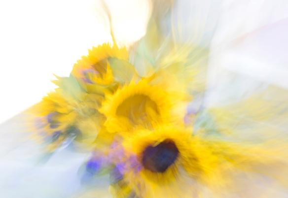 WebSunflowersAbst_DSC0059