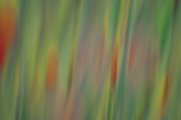 Abstract3-DSC_6436