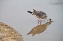 Bird1-DSC_6982