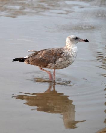 Birds-DSC_6983