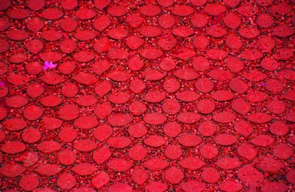 Red-DSC_0350-2
