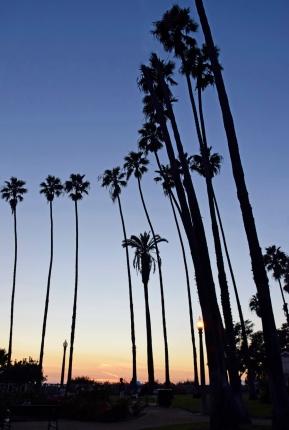 PalmTrees-Web_DSC0035