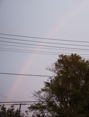 RainbowWeb-DSC_0408