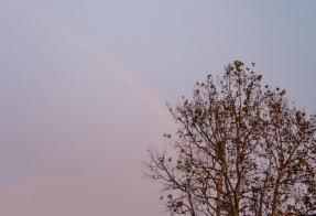 RainbowWeb-DSC_0409