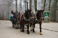 Horse carriages will take you close to the castle, but you need to walk a steep climb for about 15 minutes.
