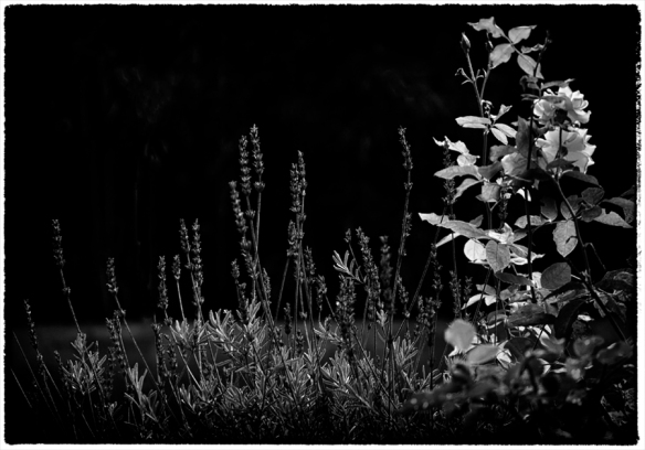 Flowers-BW-Web_DSC0780