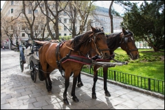 Horse carriage in Vienna.