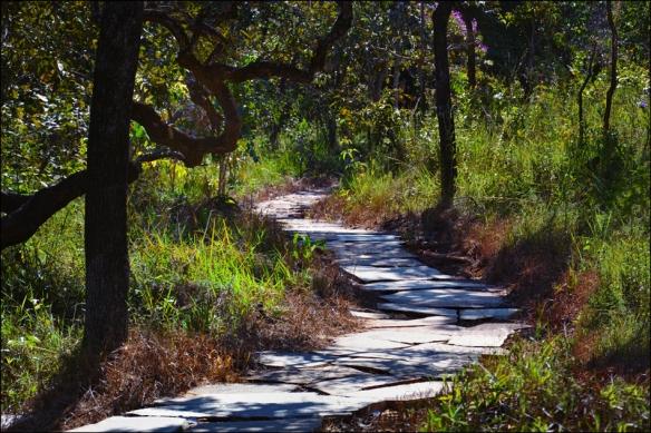 path-web-dsc_1331