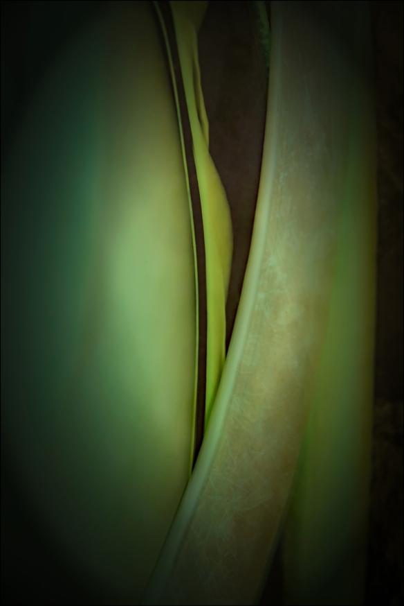 green-web-dsc_9528