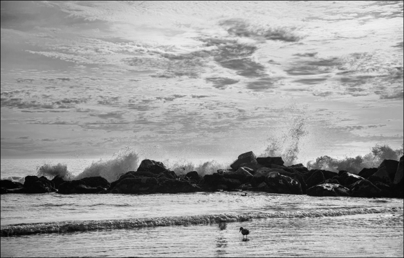 oceanbw-webdsc_8985