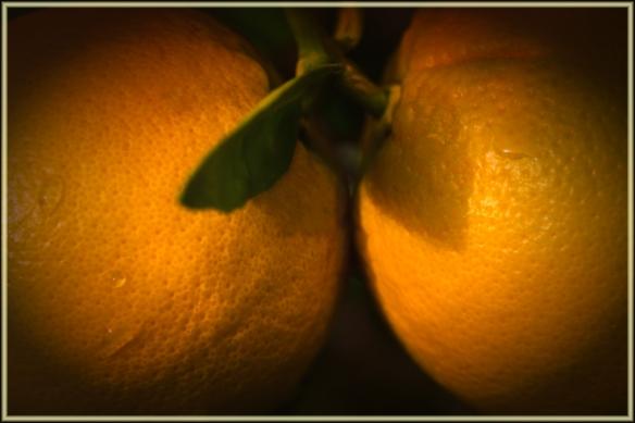 orangesweb-dsc_0967