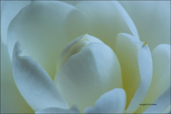 camelia-web-dsc_0213