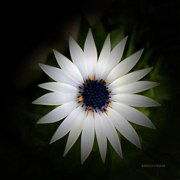 daisyweb-img_0213-edited