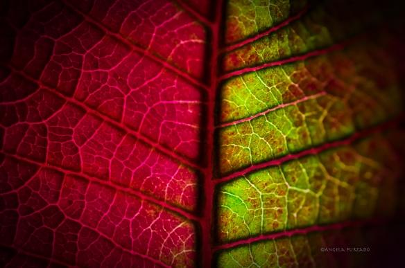 leafweb-dsc_0392