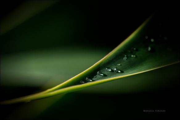 raindropsweb-dsc_0282