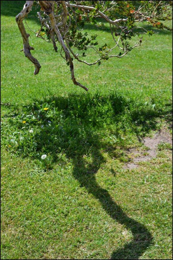 shadowweb-dsc_0422