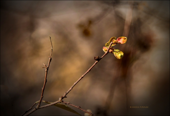 springweb-dsc_0514