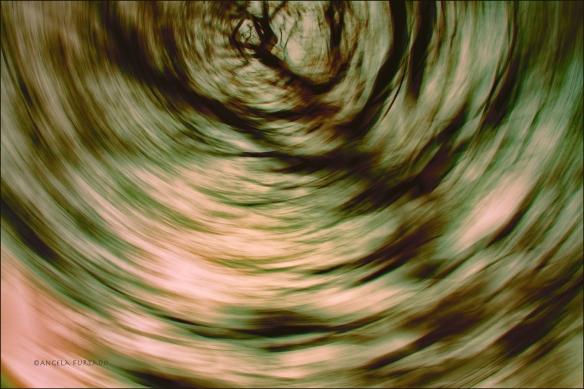 swirlweb-dsc_0589