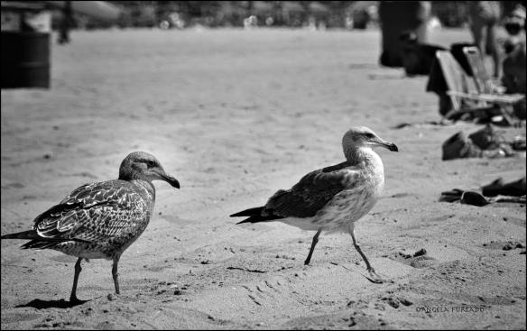 birds-dsc_0708