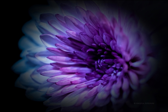 flower-dsc_0465