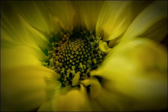 flowermacro-dsc_0491