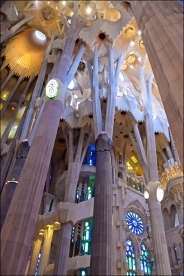 He borrowed these forms from nature and translated into the design of the columns, vaults and intersecting geometric elements of the structure of the Sagrada Família.