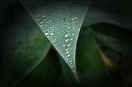 RainWeb-DSC_4473