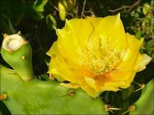CactusFlowerWeb-IMG_2838