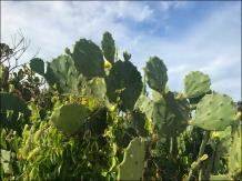 CactusFlowerWeb-IMG_2843