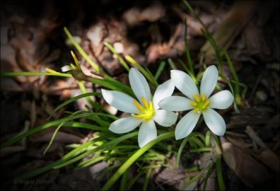 FlowersWeb-DSC_5455