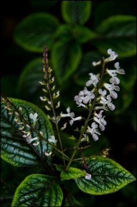 FlowersWeb-DSC_5477