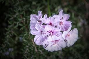 FlowerWeb-DSC_5726