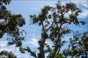 TreeWeb-DSC_5395