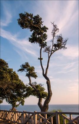 TreeWeb-DSC_5578
