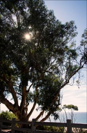 TreeWeb-DSC_7541