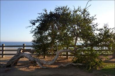 TreeWeb_DSC1148