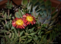 FlowersWeb-DSC_2789