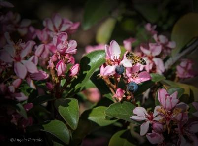 FlowersWeb-DSC_2829
