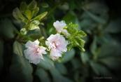 FlowersWeb-DSC_2847
