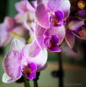 FlowersWeb-DSC_8910